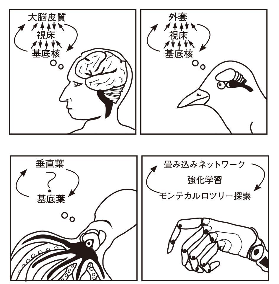 の 脳 個 何 タコ は