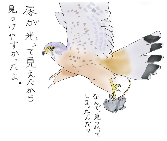 tori_shigaisen02