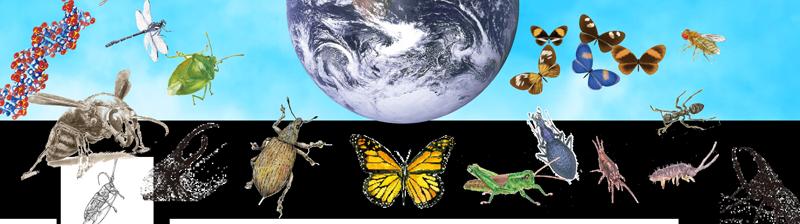 昆虫の種類はどうしてこれほど多いのか? どのような種類がいるのか?