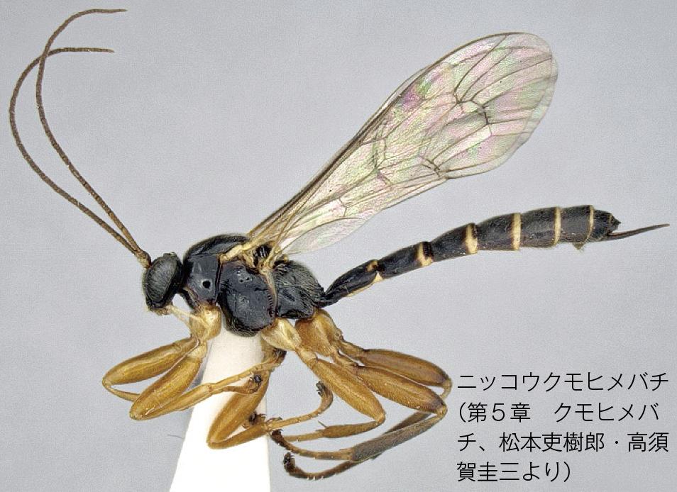 ニッコウクモヒメバチ