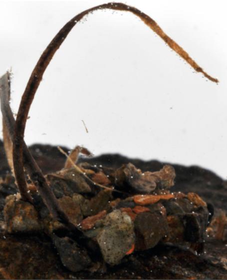 ミズバチに寄生されたニンギョウトビケラの巣