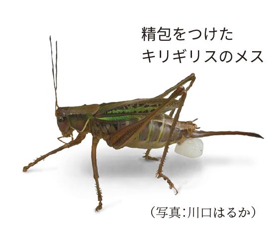 昆虫たちの結婚相手を射止める裏技集