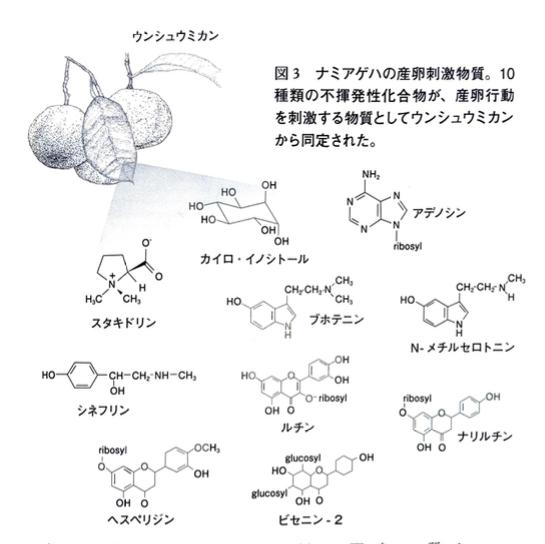 ナミアゲハ産卵物質
